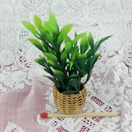 Plante verte miniature maison poup e 7 cm for Plante verte maison