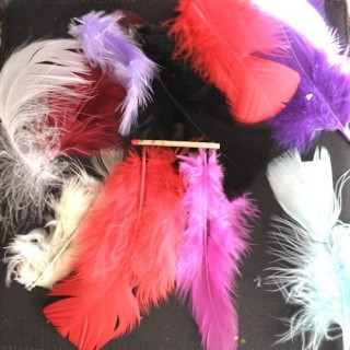 True feathers colors in mix