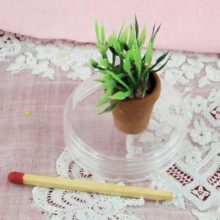 Plantar en miniatura maceta casa muñeca,