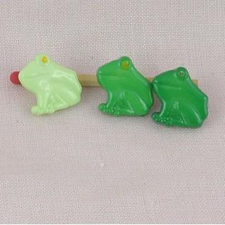 Aquatic, pound animals: frog in profile.
